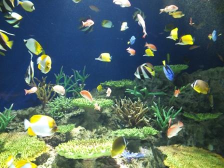 水族館に行ってきました_b0214473_19441544.jpg