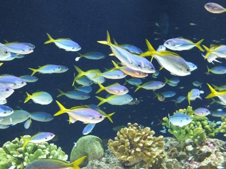 水族館に行ってきました_b0214473_19483252.jpg