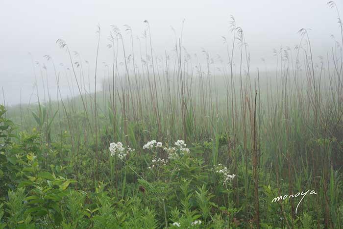夏の湿原_c0085877_4331974.jpg