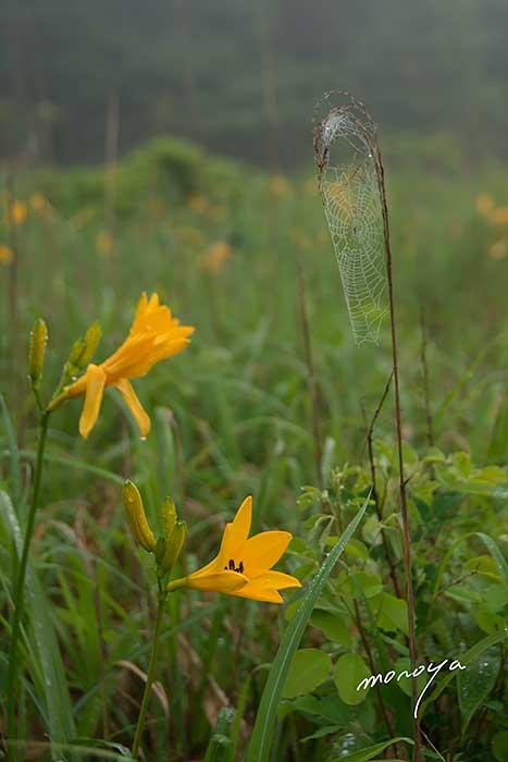 夏の湿原_c0085877_4332837.jpg