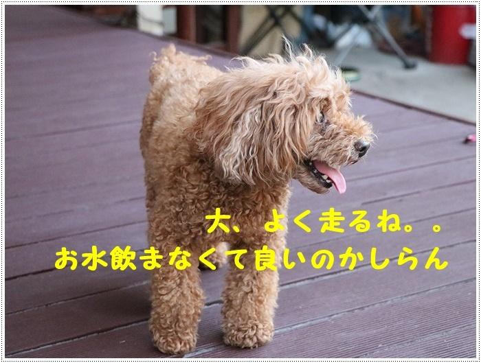 b0175688_00204501.jpg