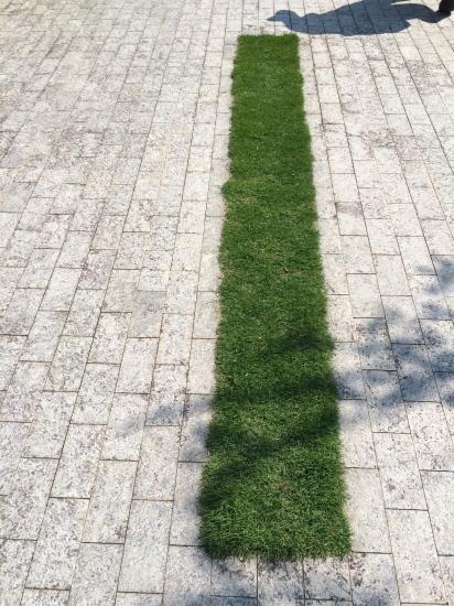 日高理恵子「空と樹と」 —ヴァンジ彫刻庭園美術館_f0236691_13421132.jpg