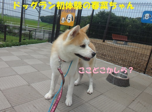f0121712_16494501.jpg
