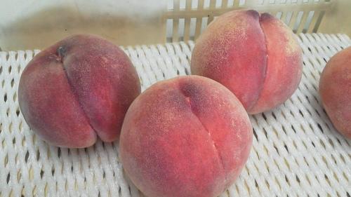 今日 良く冷えた桃を 食べてみた_f0325525_1634328.jpg