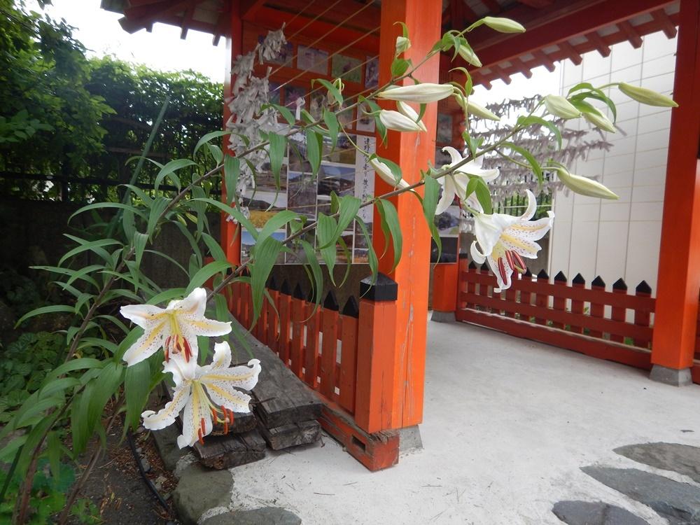 参道のヤマユリが咲始まりました_c0111229_19495488.jpg