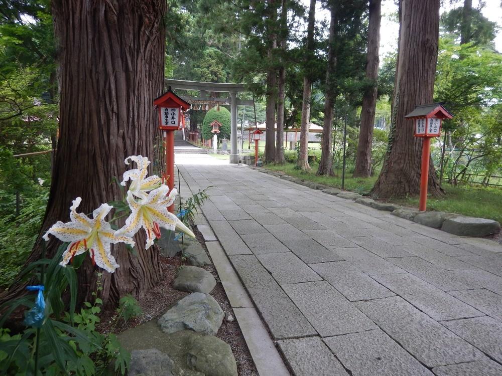 参道のヤマユリが咲始まりました_c0111229_19500222.jpg