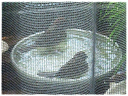 マンションの外壁工事でスズメ温泉が。。。_d0221430_17402528.jpg