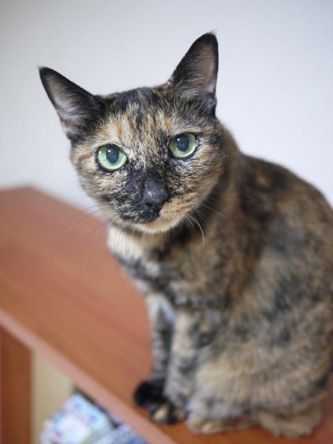 猫のお留守番 サチコちゃん編。_a0143140_21491017.jpg