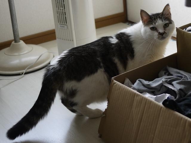 猫のお留守番 たろうくん編。_a0143140_21523255.jpg