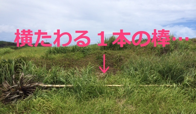 7月22日 元気な植物探し!_b0158746_14240860.jpg