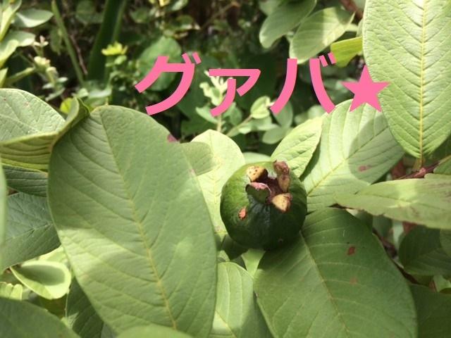 7月22日 元気な植物探し!_b0158746_14302216.jpg