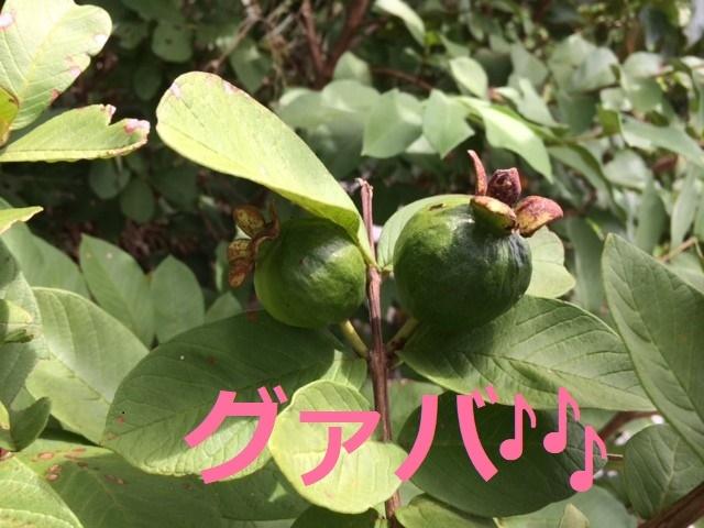 7月22日 元気な植物探し!_b0158746_14320478.jpg