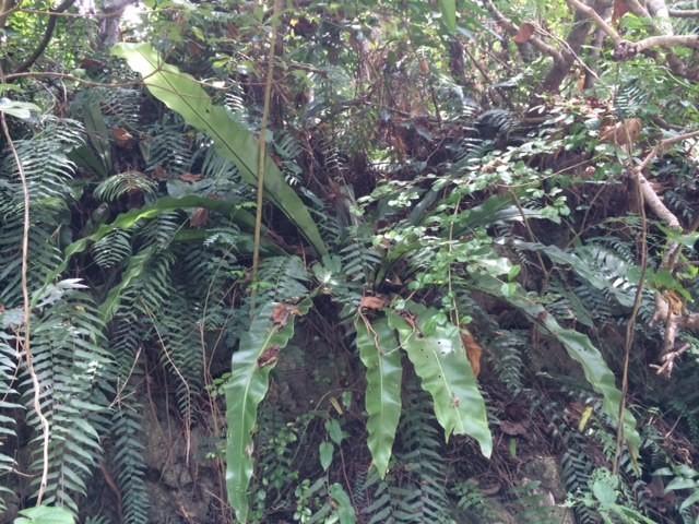 7月22日 元気な植物探し!_b0158746_14322877.jpg