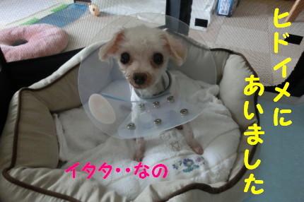 b0193480_20125436.jpg