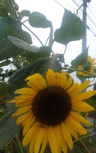 花器を作り続けて_d0195183_2412368.jpg