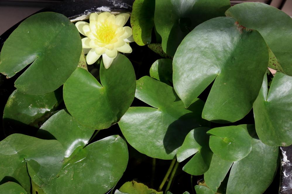 緑茂り花開く_b0190710_19534523.jpg