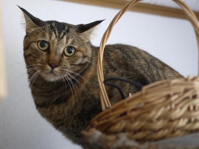 猫のお留守番 キィちゃん編。_a0143140_18044935.jpg