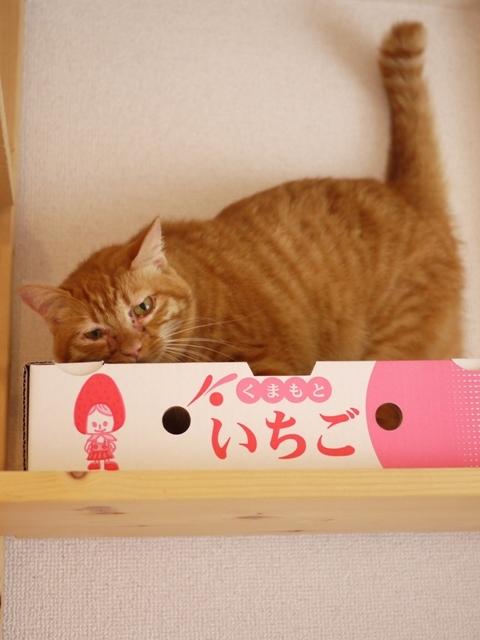 猫のお留守番 タマラちゃん編。_a0143140_18215000.jpg