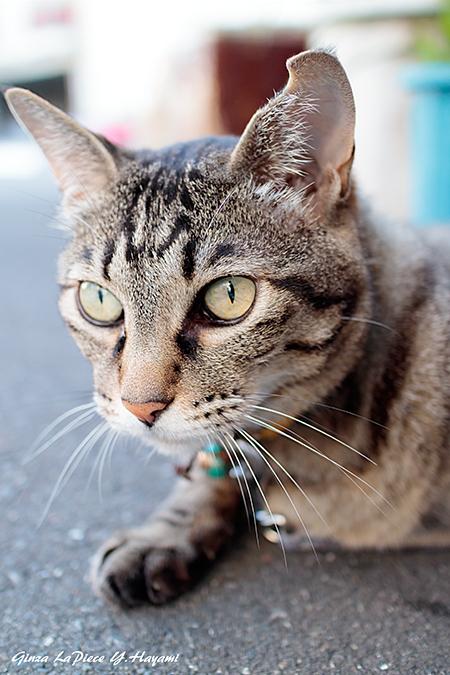 猫のいる風景 レイコちゃんのアップ_b0133053_00442352.jpg