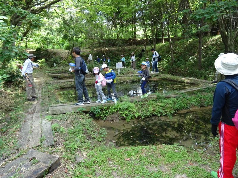 うみべの森探検・・・ZooCanくらぶ_c0108460_22293541.jpg