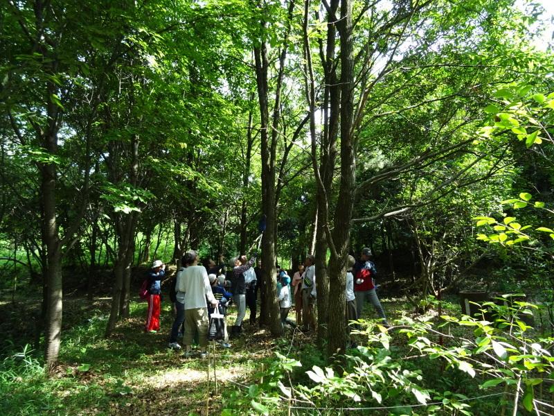 うみべの森探検・・・ZooCanくらぶ_c0108460_22314828.jpg
