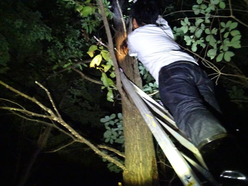 うみべの森でカブトムシ探し&ウミホタル観察・・・ZooCanくらぶ_c0108460_23540602.jpg