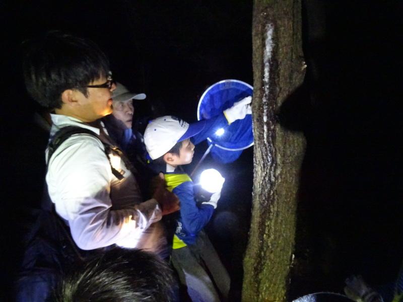 うみべの森でカブトムシ探し&ウミホタル観察・・・ZooCanくらぶ_c0108460_23540878.jpg