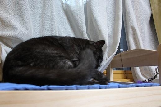 猫ベッド_a0333195_18163385.jpg