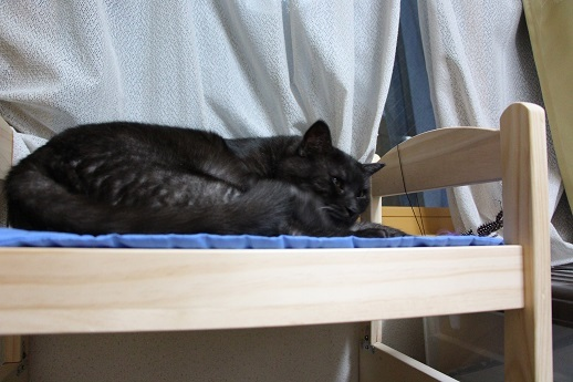 猫ベッド_a0333195_18171754.jpg