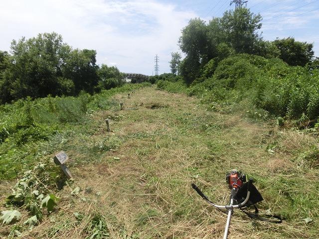 スイカの甘みが身体に浸みわたる 猛暑の中、今年初めての滝川の草刈り清掃_f0141310_06425039.jpg