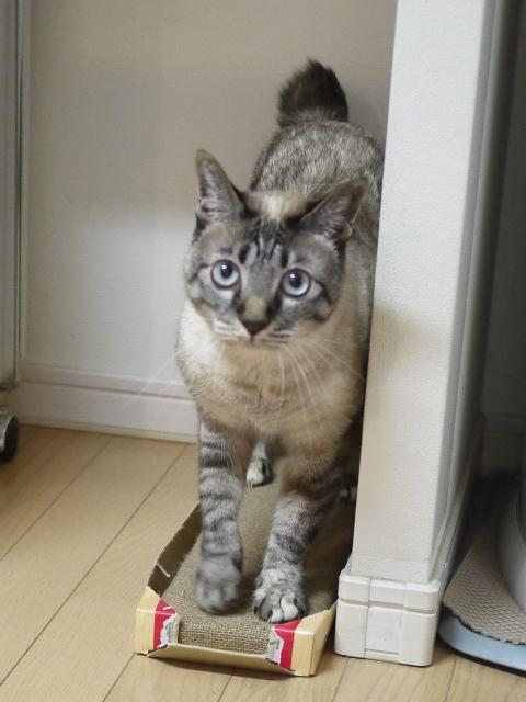 猫のお留守番 ルノーちゃん編。_a0143140_20340934.jpg