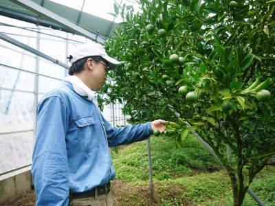 究極の柑橘『せとか』 平成30年度の収穫に向け、着果後の様子を現地取材_a0254656_17474427.jpg