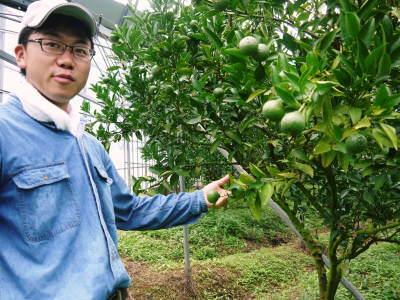 究極の柑橘『せとか』 平成30年度の収穫に向け、着果後の様子を現地取材_a0254656_17541062.jpg