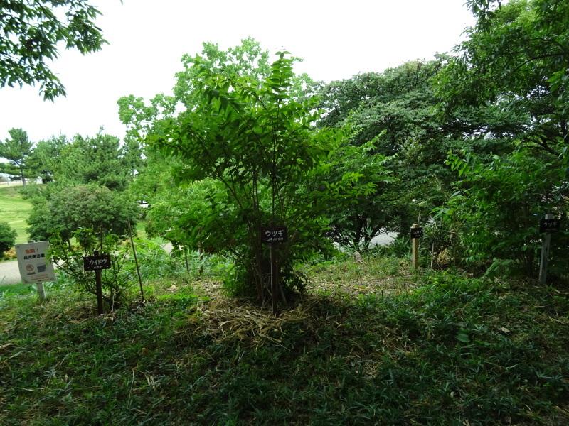 伐採木片付け&木の名札設置・・・うみべの森_c0108460_01525354.jpg