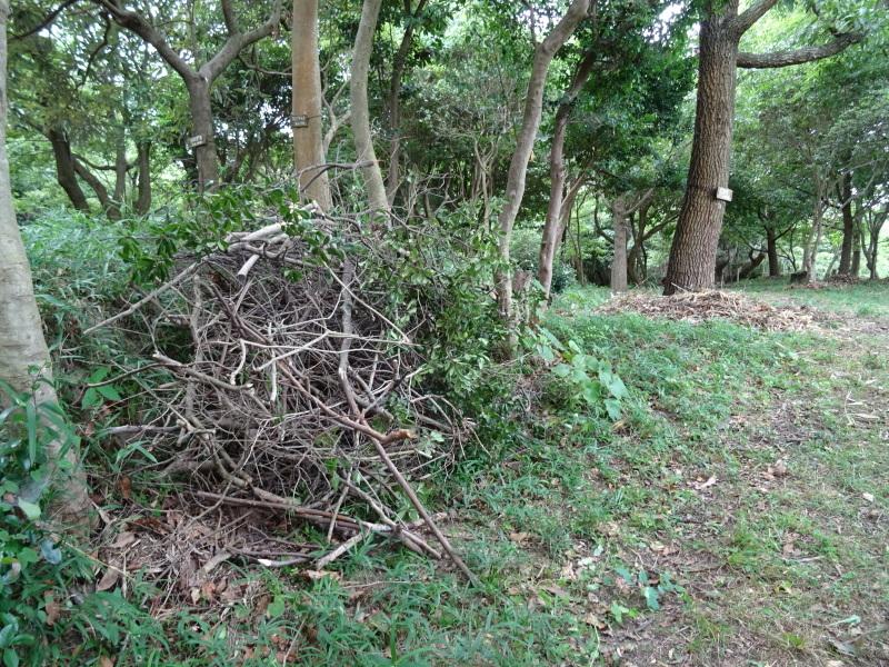 伐採木片付け&木の名札設置・・・うみべの森_c0108460_01560447.jpg