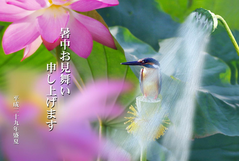 暑中お見舞い 涼しげなカワセミ_f0215767_11305560.jpg
