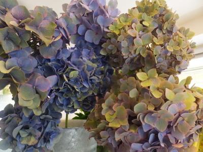 オークリーフ(青い秋色紫陽花)_f0049672_15273100.jpg
