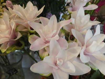 オークリーフ(青い秋色紫陽花)_f0049672_15302962.jpg