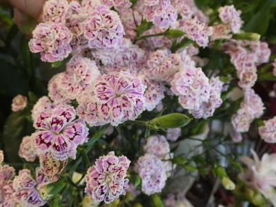 オークリーフ(青い秋色紫陽花)_f0049672_15321592.jpg