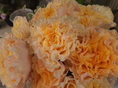 オークリーフ(青い秋色紫陽花)_f0049672_15325500.jpg