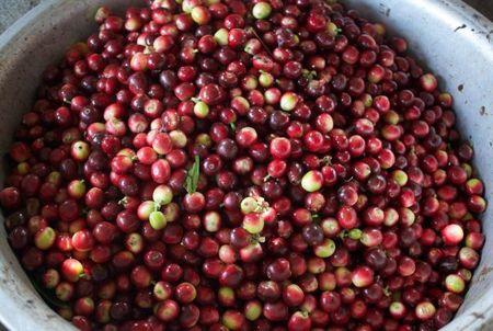 鮭の紫蘇海苔巻き ✿ おいしいコーヒー(๑¯﹃¯๑)♪_c0139375_11382546.jpg