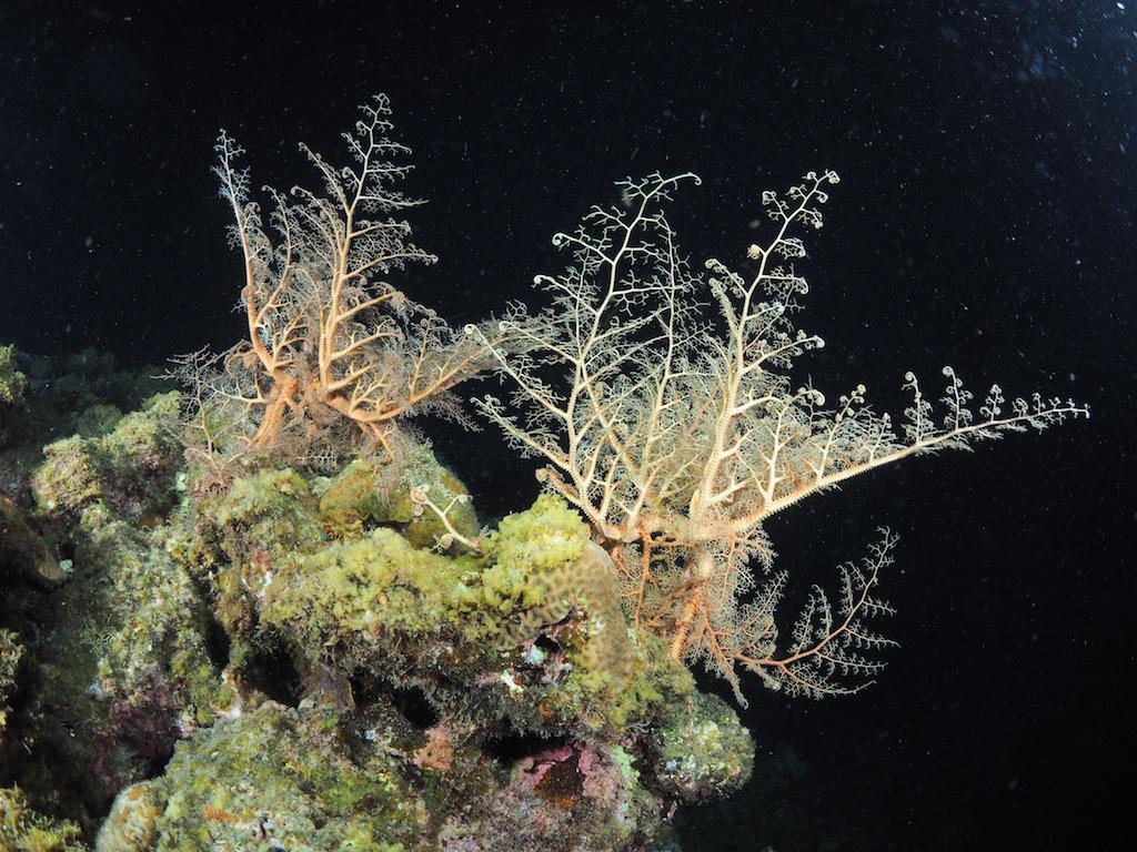 7/14 サンゴの産卵_a0010095_1812204.jpg