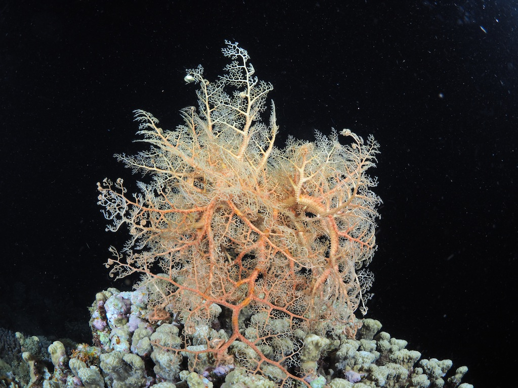 7/14 サンゴの産卵_a0010095_18123797.jpg