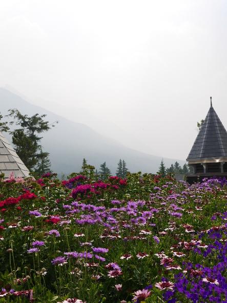 THE LOOKOUT PATIO @Banffのおいしい絶景_b0118001_13385038.jpg