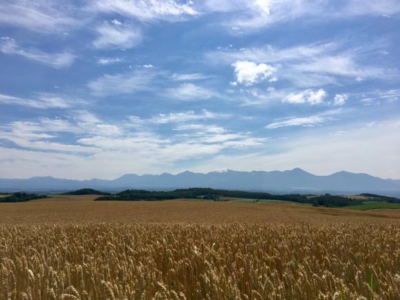 麦の刈り入れが始まります。_f0096216_15212611.jpg