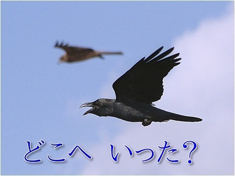 a0216818_19585920.jpg