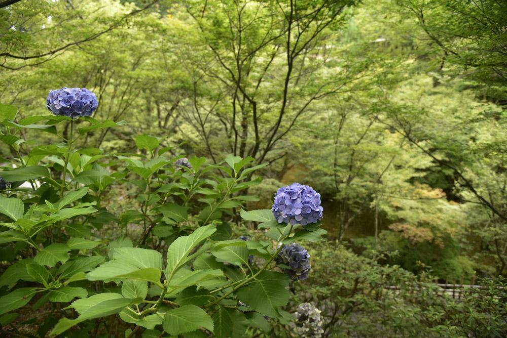 夏こそ京都_e0367330_17511065.jpg