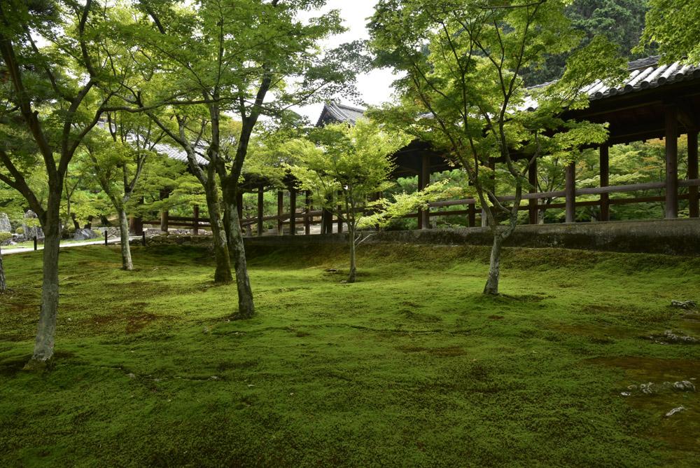 夏こそ京都_e0367330_1752444.jpg