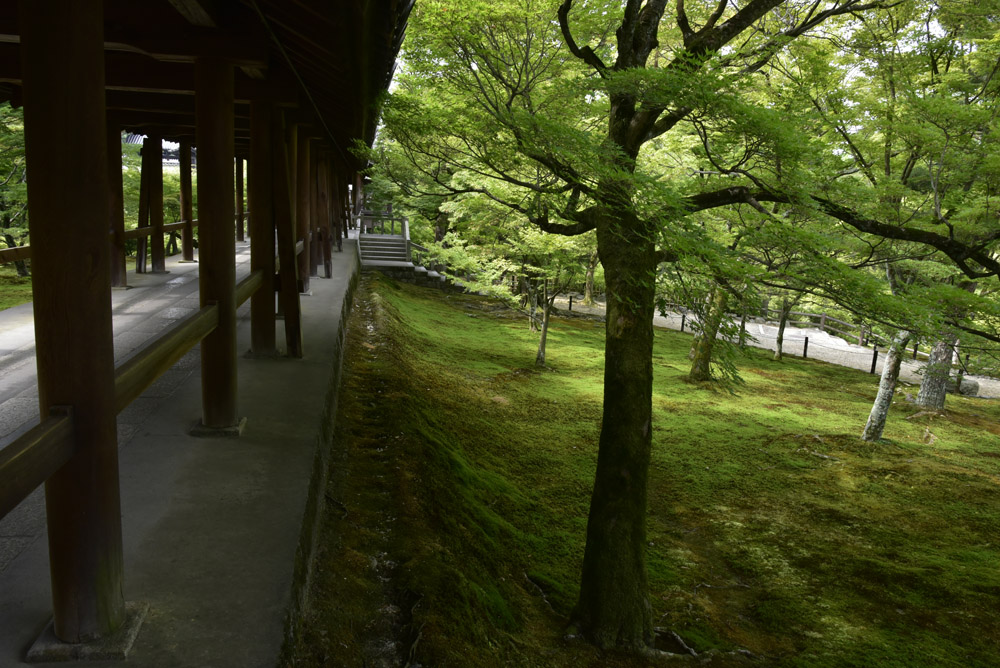 夏こそ京都_e0367330_175312.jpg