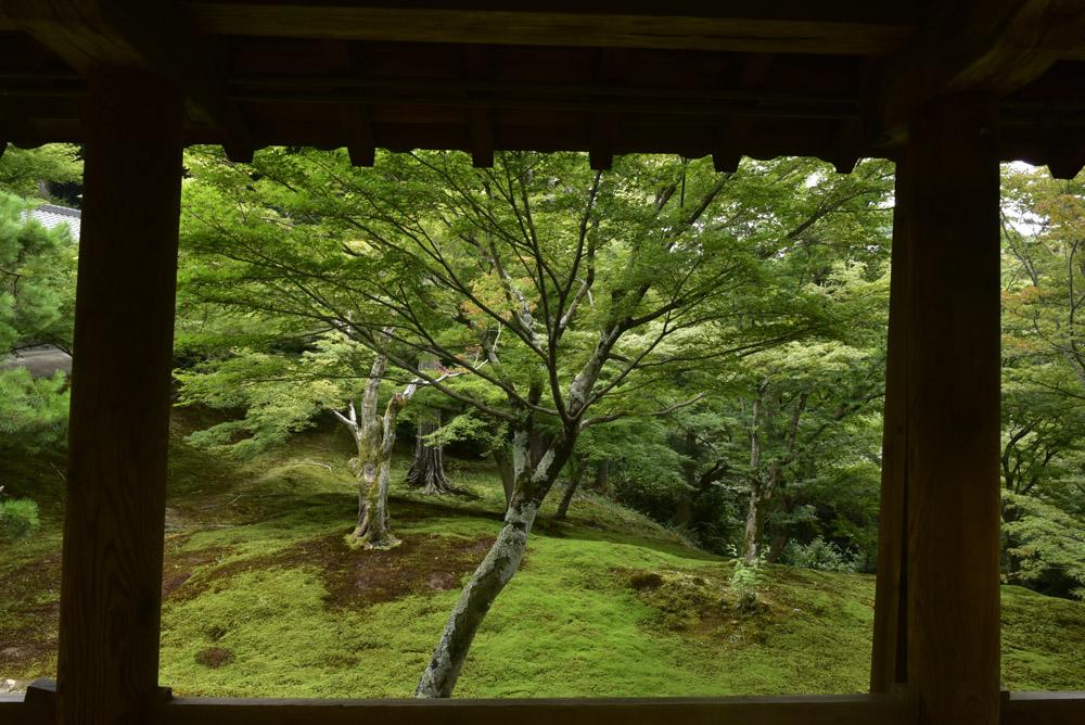 夏こそ京都_e0367330_17532337.jpg